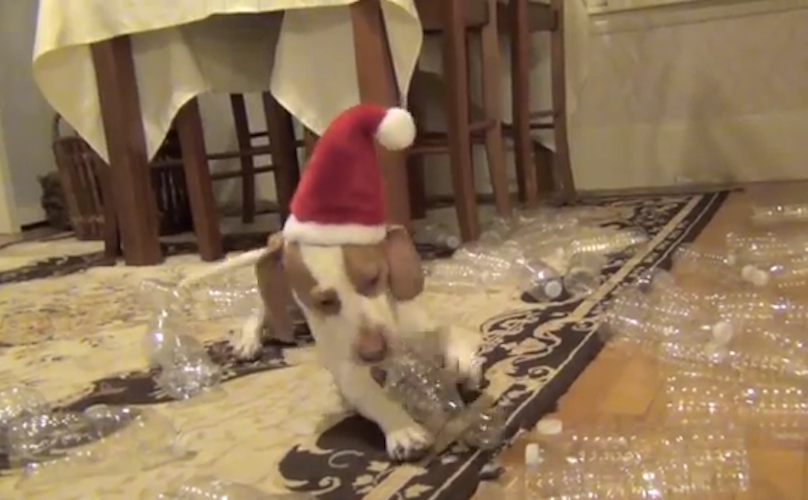 What Happens When One Dog Receives 210 Water Bottles for Christmas Is Epic