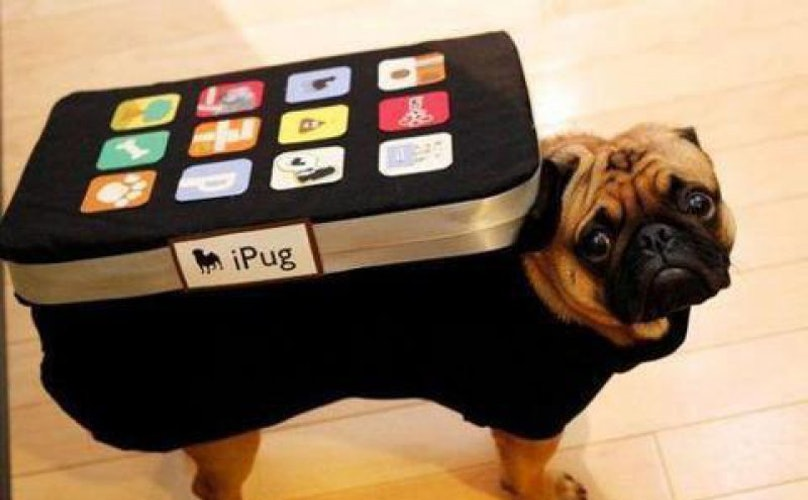 8 Dogs You Are Sure To See At SXSW