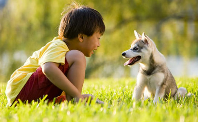 Inventive Summer Camp Teaches Kids The Proper Way To Interact With Pets