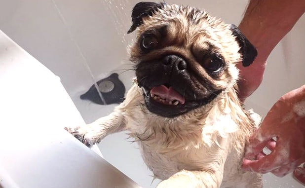 What Makes Dogs Lose Their Minds After A Bath?