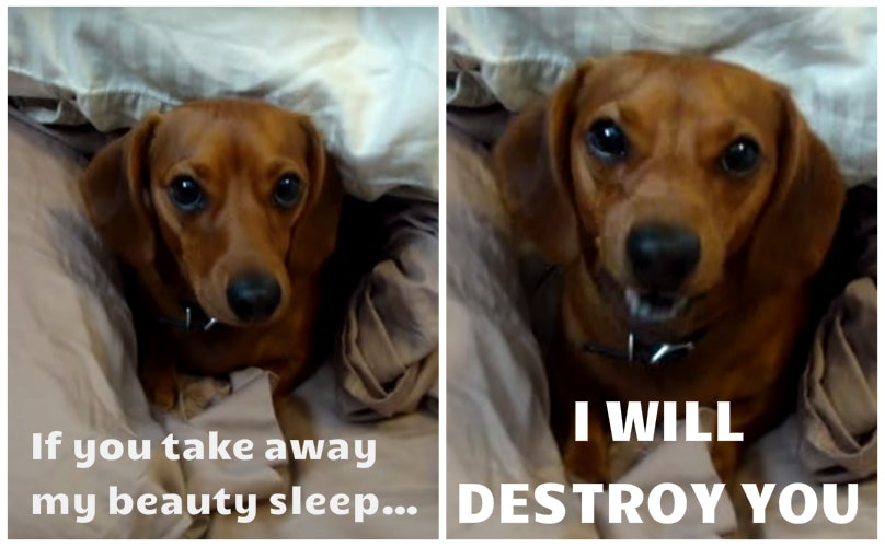 """16 Dogs Who Think You're Insane With This """"Get Out Of Bed"""" Talk"""