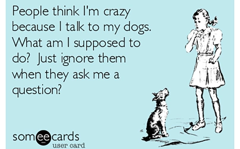 15 Conversations Everyone Has Had With Their Dog... In Their Heads