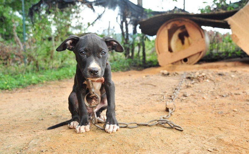 Dogfighting Explained - In Pictures
