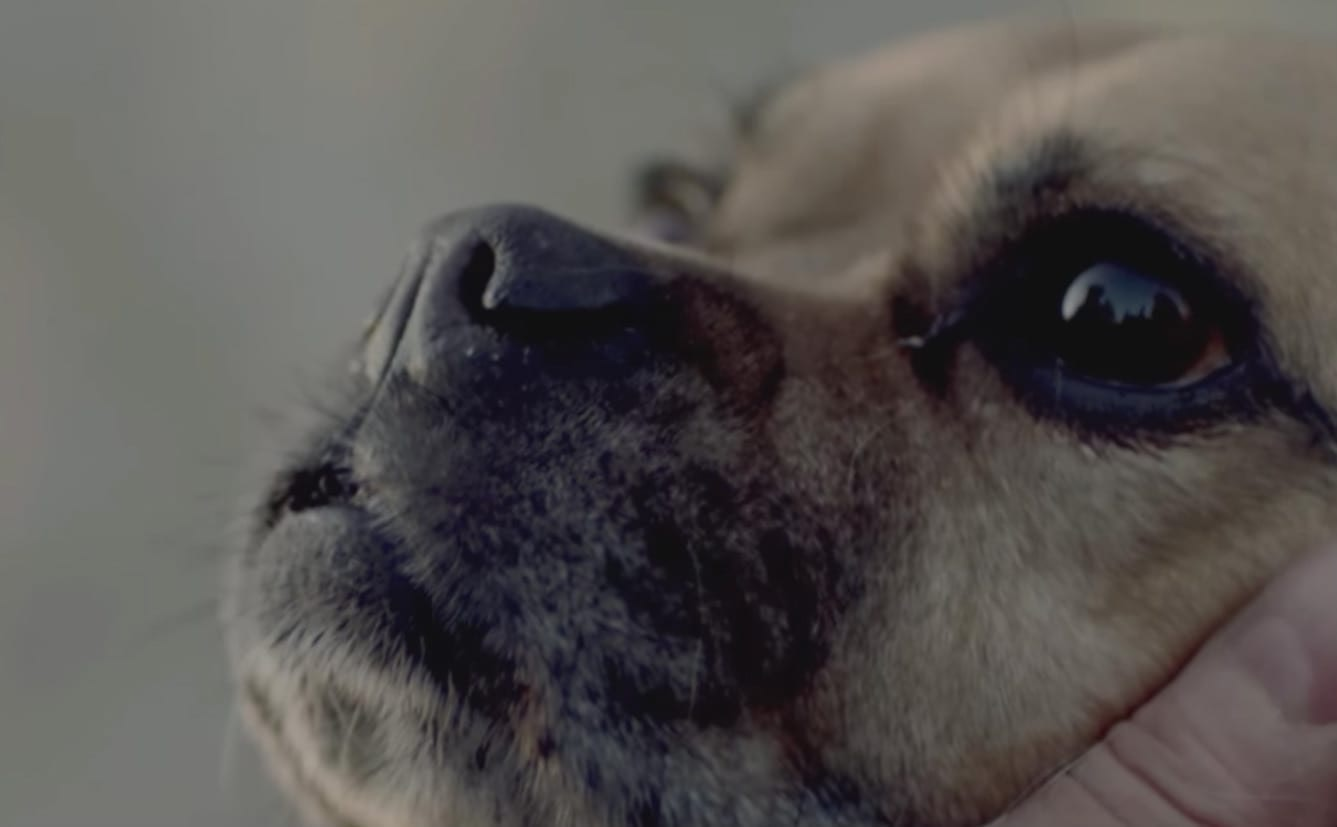 Life is Better With Your Dog, A Short Film by Bark & Co.